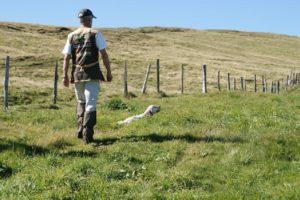 pension canine élevage Setter anglais, Gordon Épagneul breton